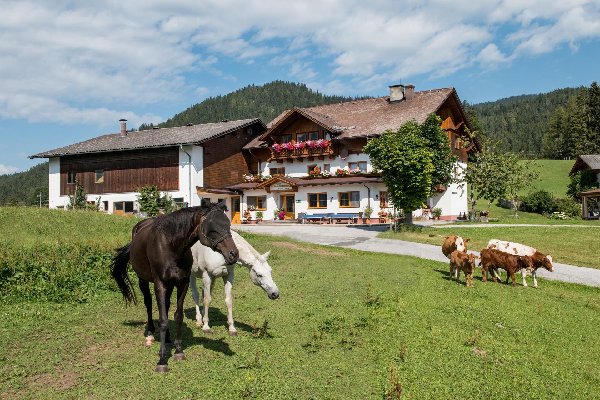 Brandstätterhof - Urlaub am Bauernhof